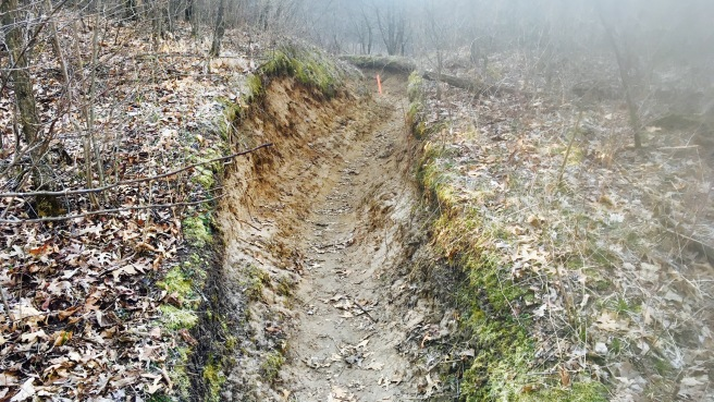 rough running terrain through a rut formed in the woods