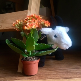 Small plant and goat stuffed animal